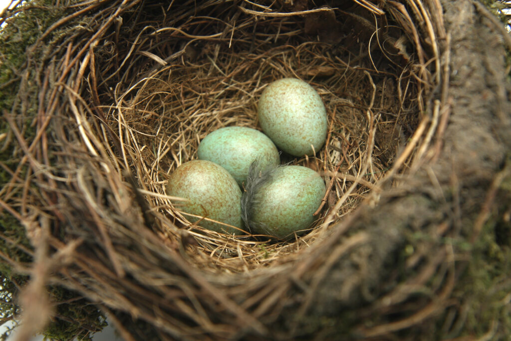 What to do with your nest egg